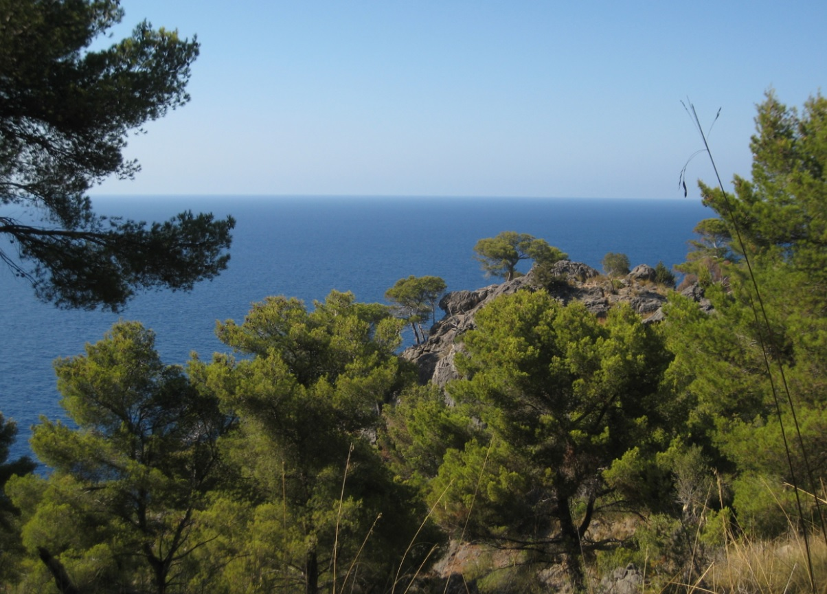 Natur auf Mallorca